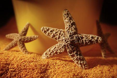 dimly: Dimly lit starfish against a beach pail