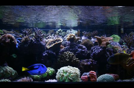 fish tank: Tropical Fish Tank Stock Photo