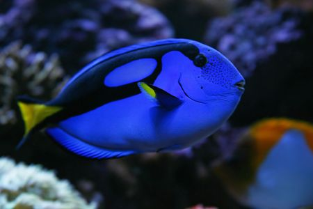 Regal Tang photo
