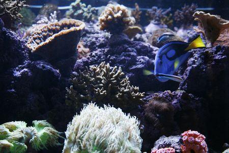 fish tank: Fish Tank Stock Photo
