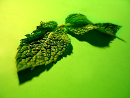 2 mint leaves on a vibrant green background.