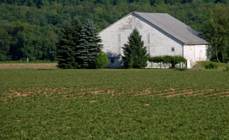recently: White Bank Barn surrounded by fields of recently planted crops, with forested mountain background