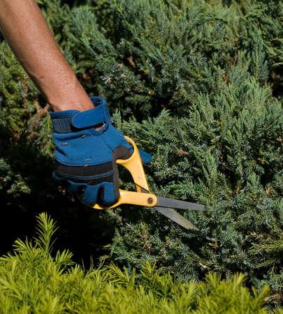 snip: The Patient Gardener Stock Photo