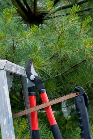 clippers: View of clippers, saw, and ladder, with pine tree background.