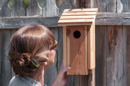 highlighted hair: Woman with pretty, glossy,  highlighted hair adjusts bird house. Stock Photo