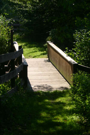 Small bridge in a forest
