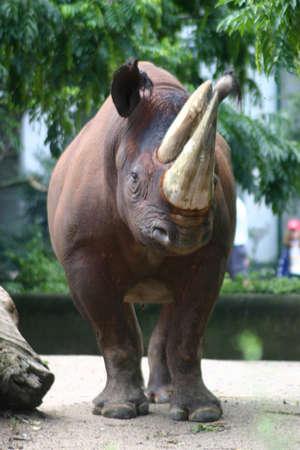 Rhinocerus Stock Photo