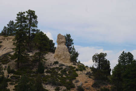 A rock formation among trees photo