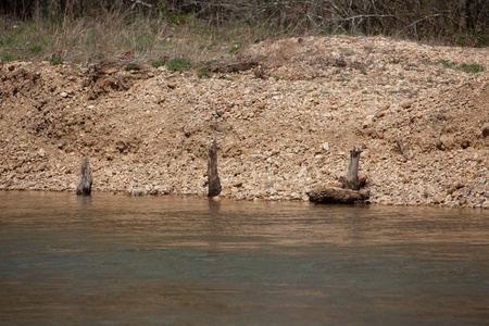 river bank: Sticks sticking out of a river bank. Stock Photo
