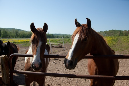 Horses behind a fence. photo