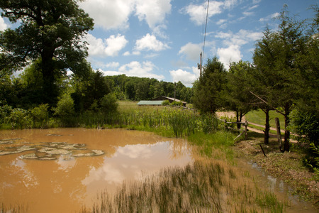 muddy: A muddy pond in a rural landscape. Stock Photo