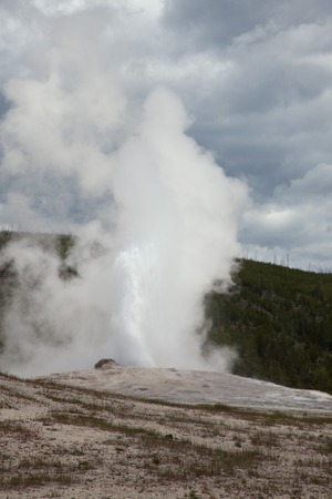faithful: A view of Old Faithful in Yellowstone National Park.