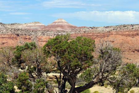 desert vegetation: Desert vegetation and mountains in the United States.