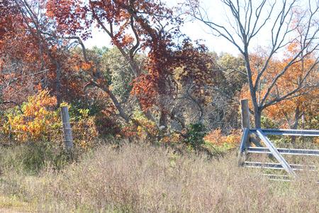 open gate: An open gate on a farm in the fall.