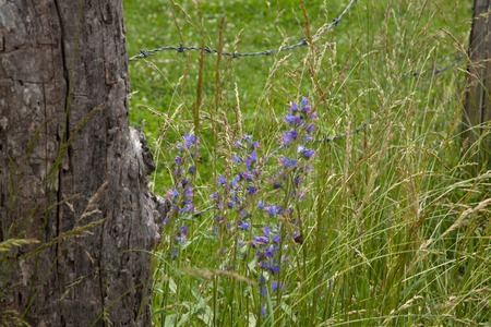 barbed wire fences: Wildflowers growing along a barbed wire fence.