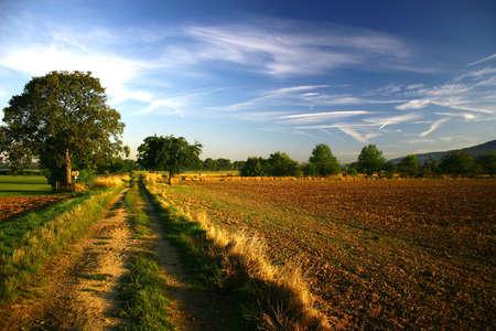 field morning landscape Stock Photo