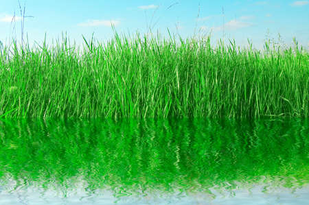 herbage: The coast lake.