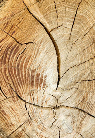 wooden texture Stock Photo - 1535769