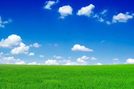 The field and blue sky. Stock Photo - 2024348
