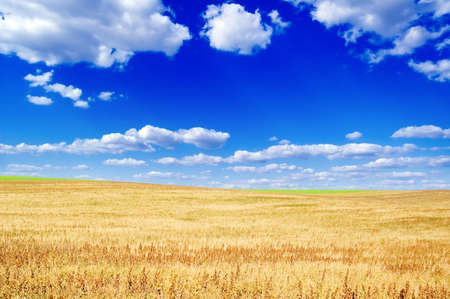 Autumn field, blue sky and clouds.  photo