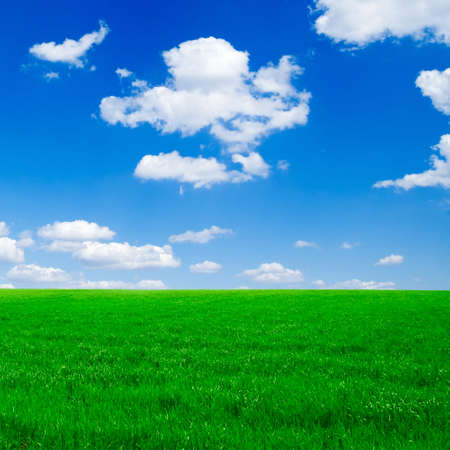 Green field on a background of the blue sky. photo