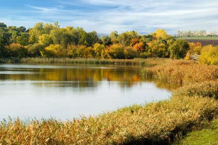 Coast of lake, rush , autumn wood. photo