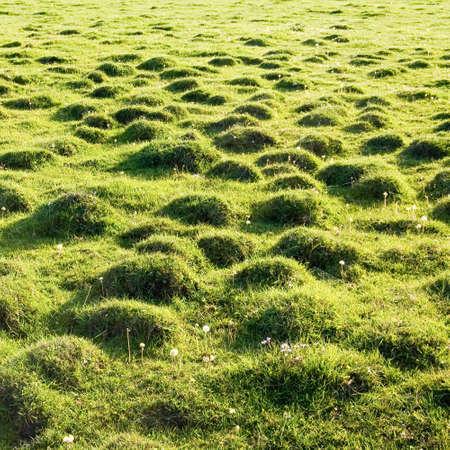 molehill: Molehill covered by a grass. Stock Photo