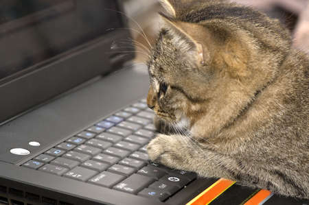 computer keyboard keys: The small kitten sits on the keyboard of a personal computer. Stock Photo