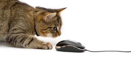 The small kitten plays with the computer mouse. Stock Photo