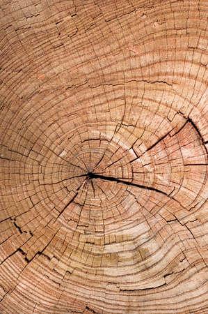 La textura de madera  Foto de archivo