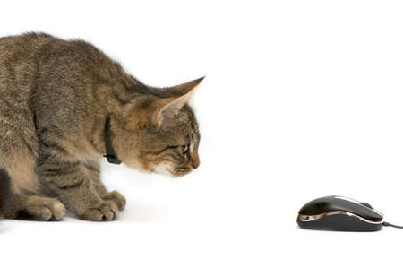 personal computers: The small kitten plays with the computer mouse. Stock Photo