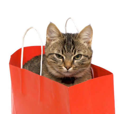 Kitten in a paper bag on a white background. photo