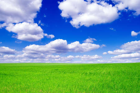 Green spring field covered by a grass and the beautiful blue sky.