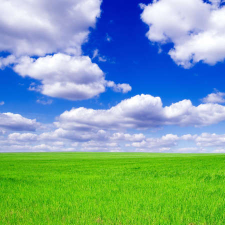 Green field, blue sky, white clouds  photo