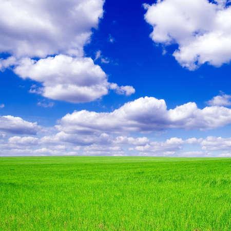 Verde sobre el terreno, cielo azul, nubes blancas