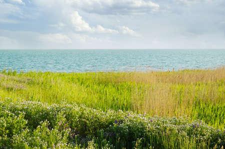 bullrush: Coast of the big lake.