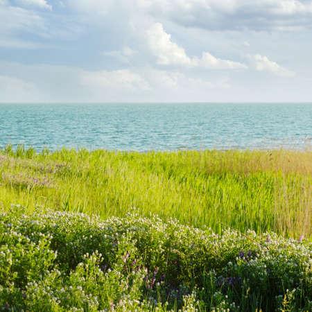bullrush: Coast of the big lake