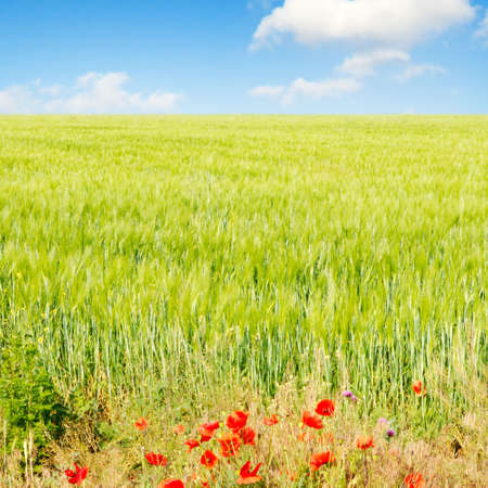 spring field and clouds Stock Photo - 2671146