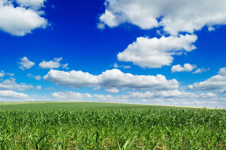 field and beautiful blue sky photo