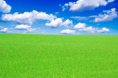 spring field covered by a grass and the beautiful blue sky Stock Photo - 2751425