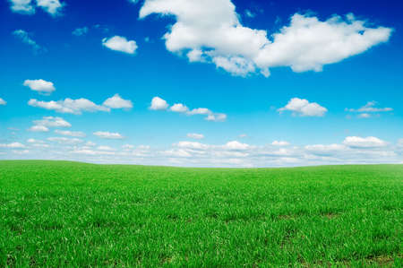 spring field covered by a grass and the beautiful blue sky Stock Photo - 2751423