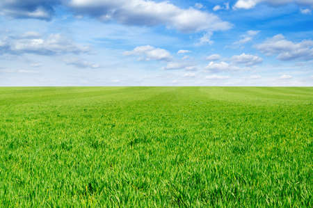 green field, blue sky, white clouds Stock Photo - 2751426