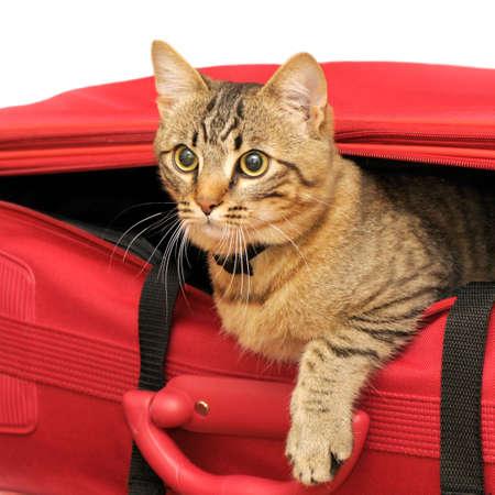 brute: Cat in una valigia