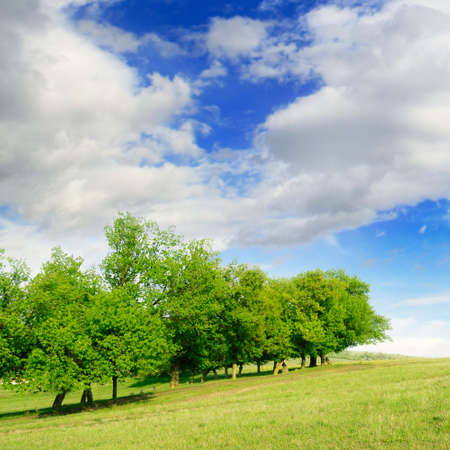 colorful cloudscape: Green field and blue sky