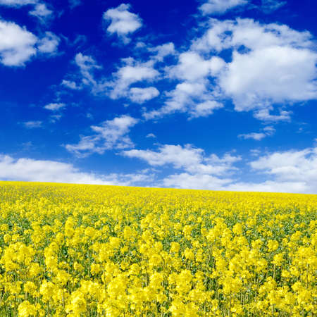 yellow flowers on spring field Stock Photo - 2910175