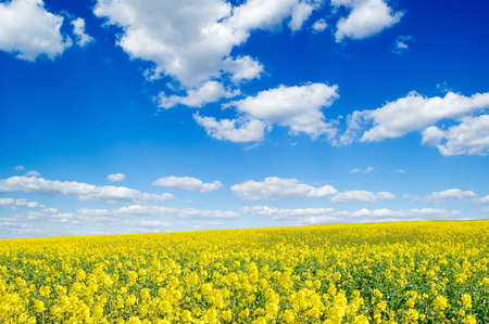 yellow flowers on spring field Stock Photo - 2910178