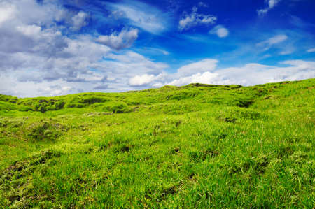 landslip: overgrown a grass a hill on a background of the sky
