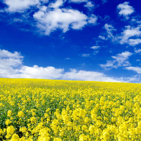 yellow flowers on spring field Stock Photo - 2993057