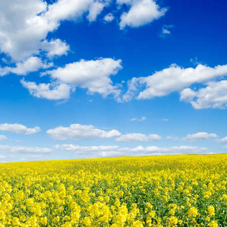 yellow flowers on spring field Stock Photo - 2993053