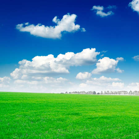 white beautiful clouds and a green field Stock Photo - 2993040